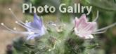 Photo Gallery!